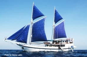 Top 3 Liveaboard To Komodo National Park