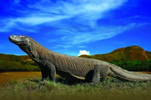 The History of Komodo National Park