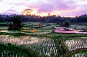 Four days in Ubud: Beyond Eat, Pray, Love