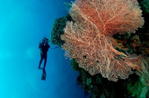 "WAKATOBI National Marine Park: the""Underwater Nirwana"""