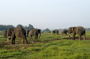 Way Kambas National Park: Habitat of the Sumatran Elephants